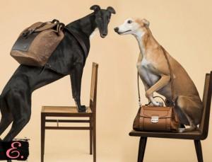 Реклама различных видов сумок собаками
